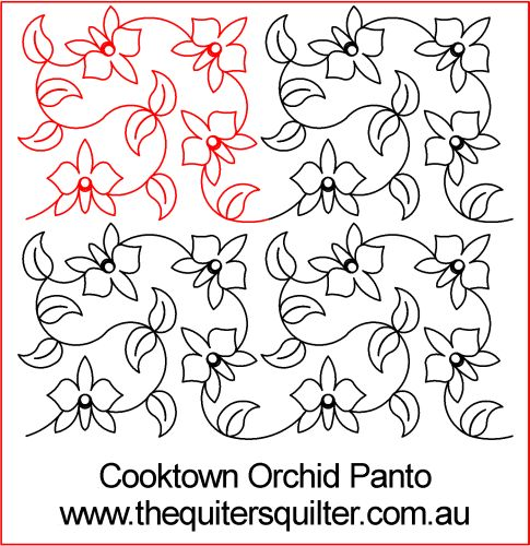 Cook Town Orchid Panto