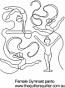 Female Gymnast panto
